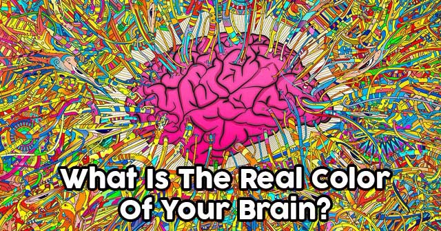 what is the real color of your brain