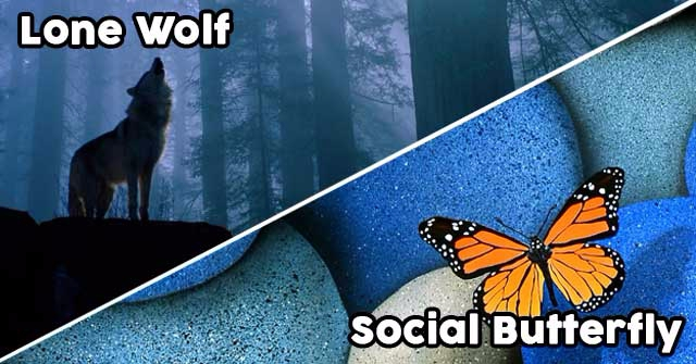 Are You A Lone Wolf Or A Social Butterfly?