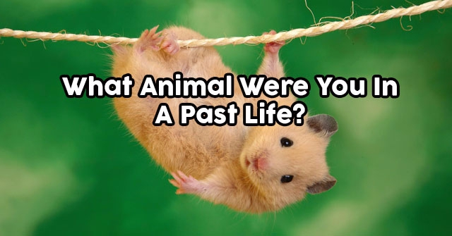 What Animal Were You In A Past Life?
