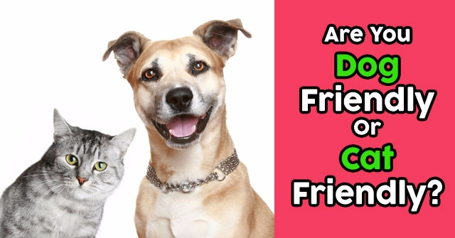 Are You Dog Friendly Or Cat Friendly?
