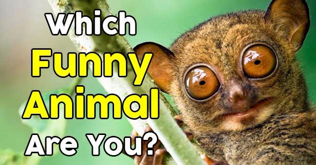 Which Funny Animal Are You?