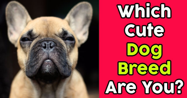 Which Cute Dog Breed Are You?