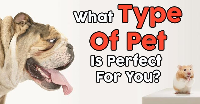 What Type Of Pet Is Perfect For You?