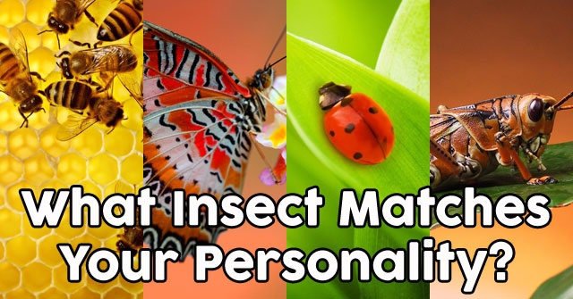 What Insect Matches Your Personality?