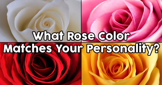 What Rose Color Matches Your Personality?