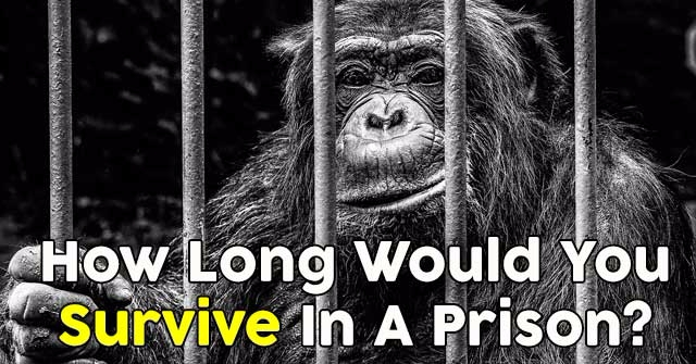 How Long Would You Survive In A Prison?