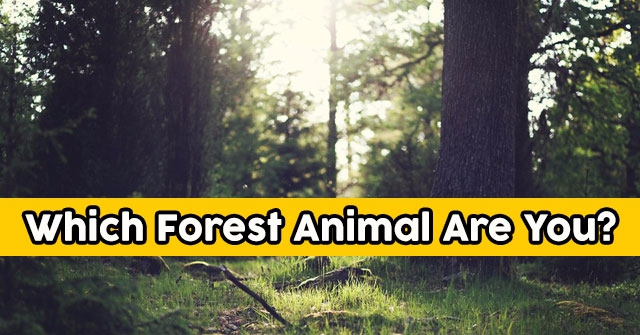 Which Forest Animal Are You?