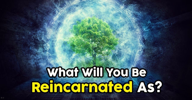 What Will You Be Reincarnated As?