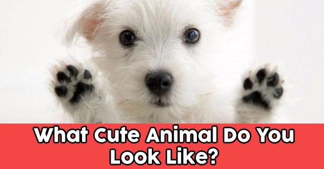 What Cute Animal Do You Look Like?