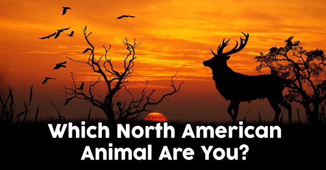 Which North American Animal Are You?