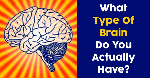 What Type Of Brain Do You Actually Have?