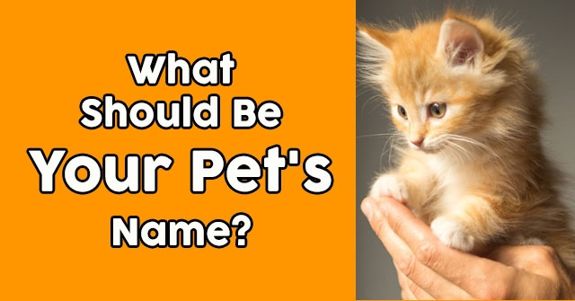 What Should Be Your Pet's Name?