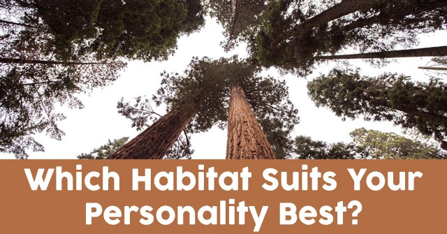 Which Habitat Suits Your Personality Best?