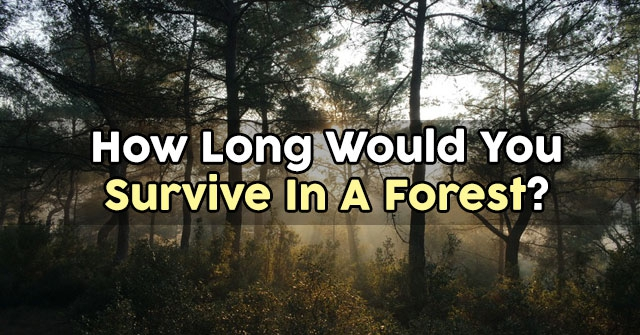 How Long Would You Survive In A Forest?