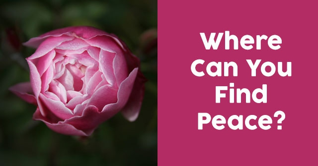 Where Can You Find Peace?