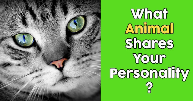 What Animal Shares Your Personality?