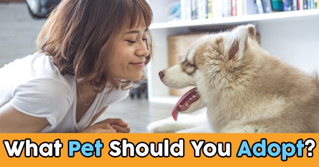 What Pet Should You Adopt?