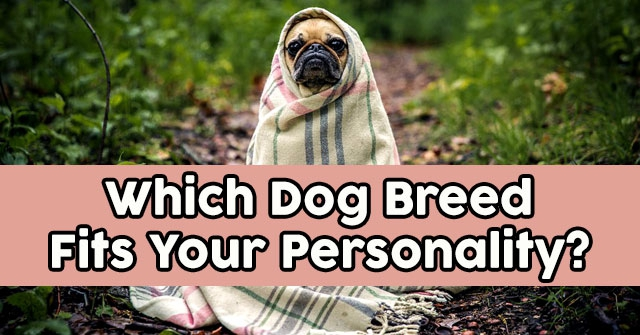 Which Dog Breed Fits Your Personality?