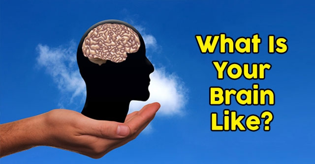 What Is Your Brain Like?