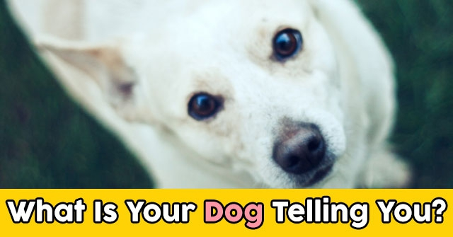 What Is Your Dog Telling You?