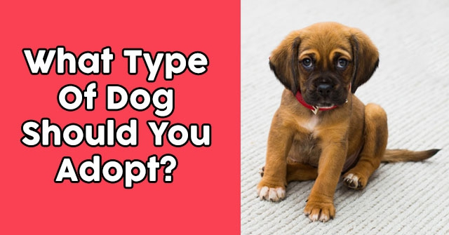 What Type Of Dog Should You Adopt?