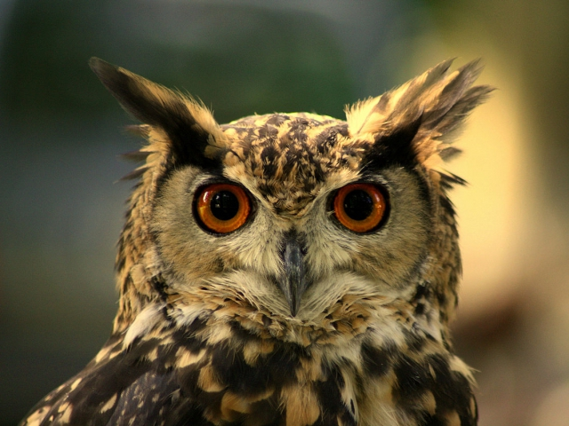 Are you a early morning riser or night owl?