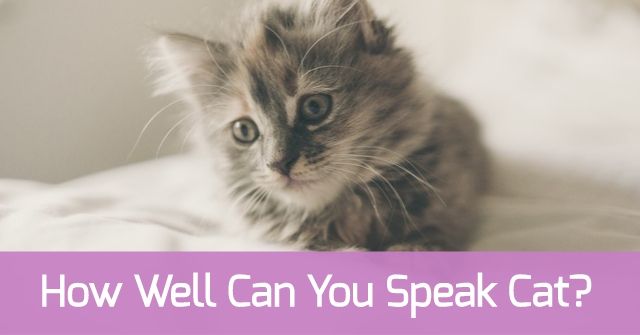 How Well Can You Speak Cat?