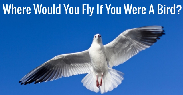 Where Would You Fly If You Were A Bird?