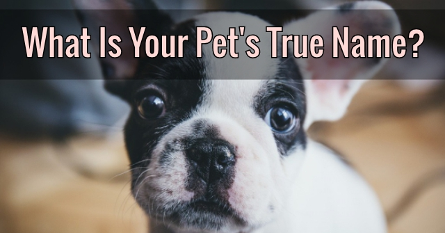 What Is Your Pet's True Name?