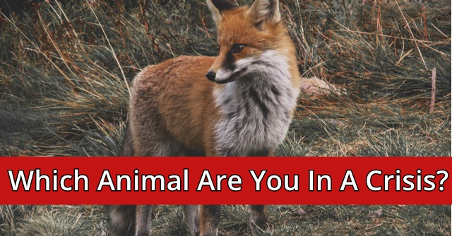 Which Animal Are You In A Crisis?