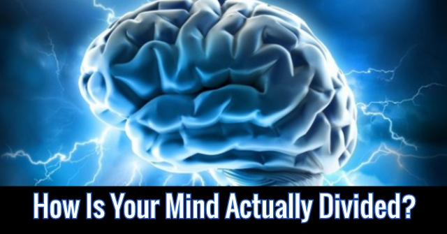 How Is Your Mind Actually Divided?