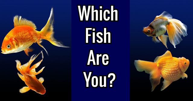 Which Fish Are You?