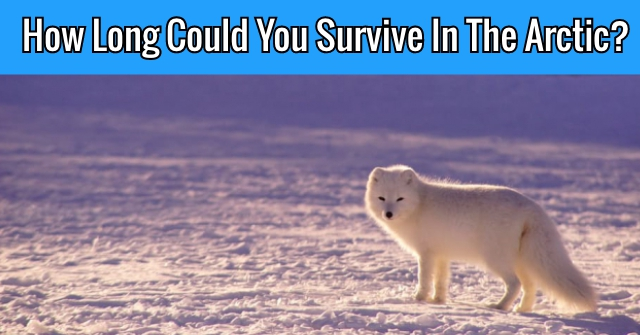 How Long Could You Survive In The Arctic?