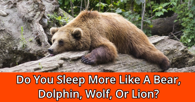 Do You Sleep More Like A Bear, Dolphin, Wolf, Or Lion?