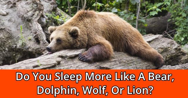 Do You Sleep More Like A Bear, Dolphin, Wolf, Or Lion?