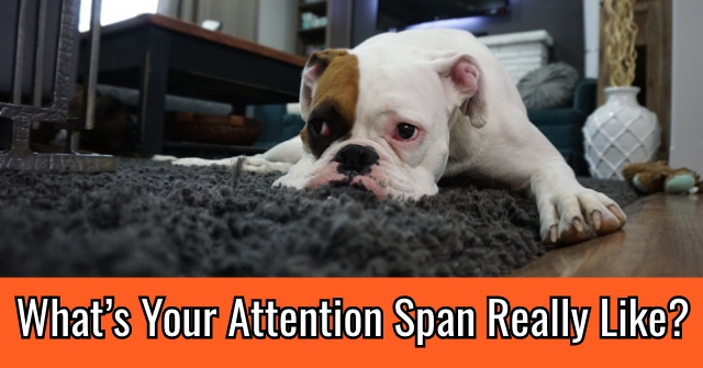 What's Your Attention Span Really Like?