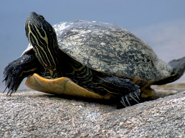 What would your child do if they saw a small turtle trying to cross the road?