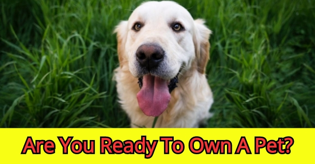 Are You Ready To Own A Pet?