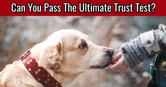 Can You Pass The Ultimate Trust Test?