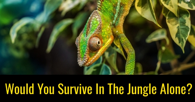 Would You Survive In The Jungle Alone?