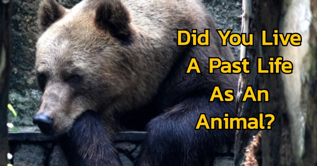Did You Live A Past Life As An Animal?