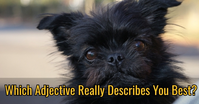 Which Adjective Really Describes You Best?