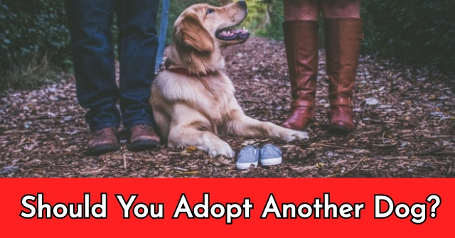 Should You Adopt Another Dog?