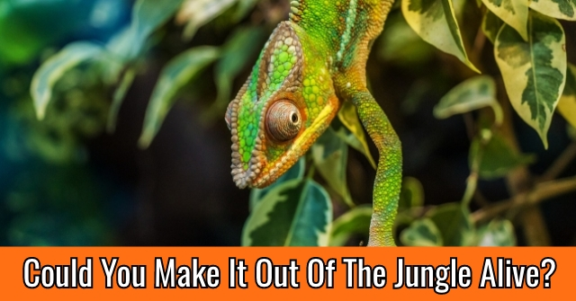 Could You Make It Out Of The Jungle Alive?