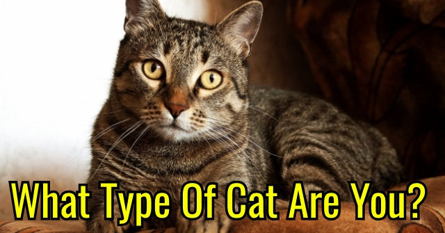 What Type Of Cat Are You?