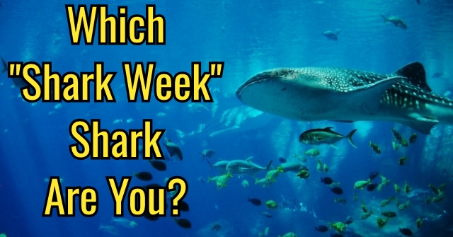 "Which ""Shark Week"" Shark Are You?"