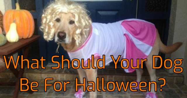What Should Your Dog Be For Halloween?