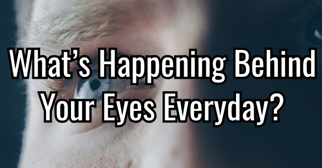 What's Happening Behind Your Eyes Everyday?