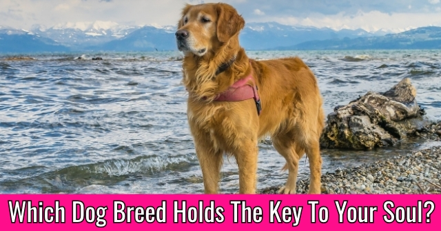 Which Dog Breed Holds The Key To Your Soul?