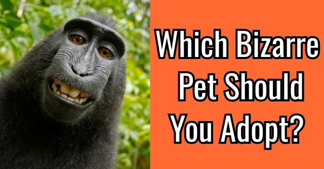 Which Bizarre Pet Should You Adopt?